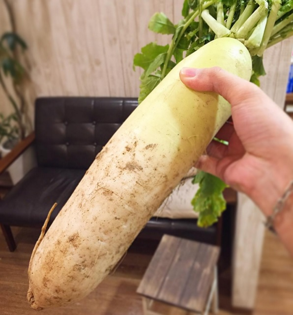 野菜頂く2016011