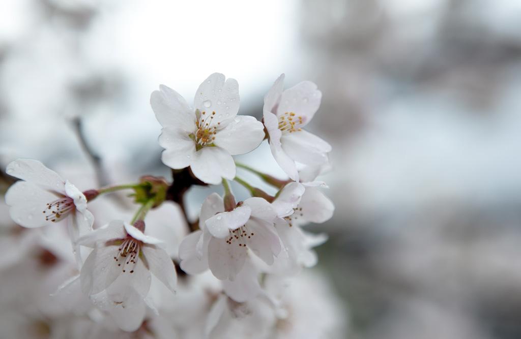 4月っぽい画像2017桜